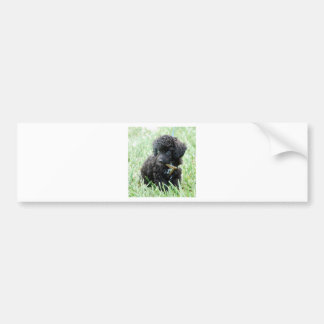 Toy Poodle Puppy Bumper Stickers