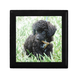 Toy Poodle Puppy Gift Box