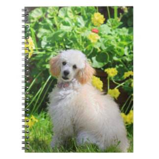 Toy poodle puppy journal