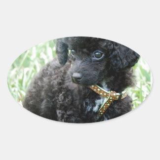 Toy Poodle Puppy Oval Sticker