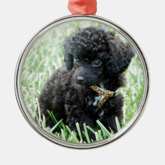 Toy Poodle Puppy Silver-Colored Round Decoration