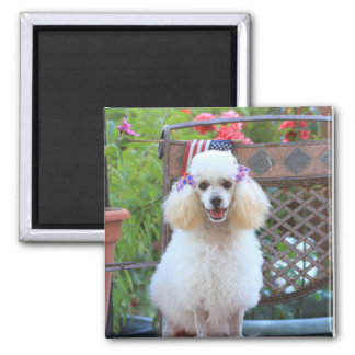 Toy Poodle puppy square magnet