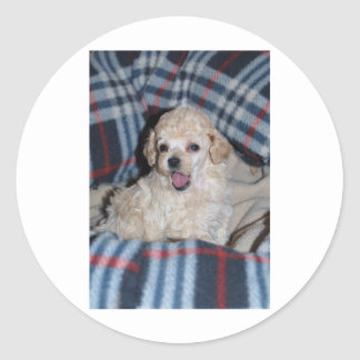 Toy Poodle Puppy Talking Classic Round Sticker