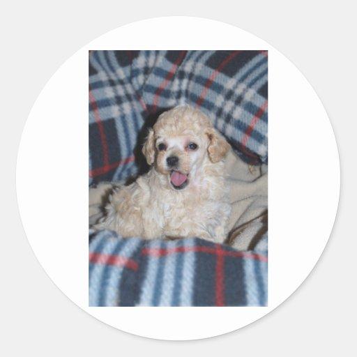 Toy Poodle Puppy Talking Sticker