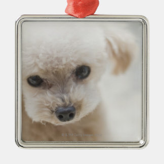 toy poodle Silver-Colored square decoration
