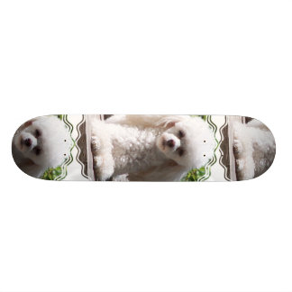Toy Poodle Skateboard