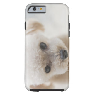 toy poodle tough iPhone 6 case