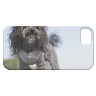 toy poodle wearing t-shirt iPhone 5 cover