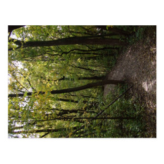 Track, Pathway, Trail, Forest, Trees, Attractive, Postcard
