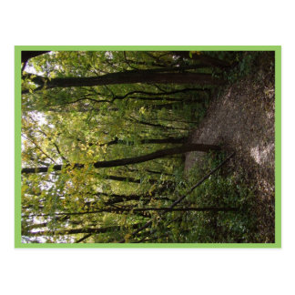Track, Pathway, Trail, Forest, Trees, Attractive, Postcards