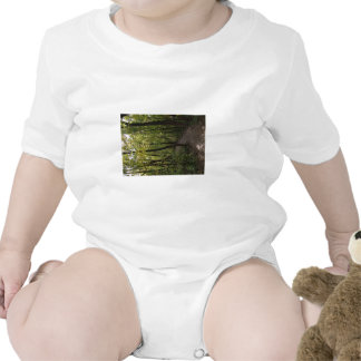 Track, Pathway, Trail, Forest, Trees, Attractive, Baby Creeper