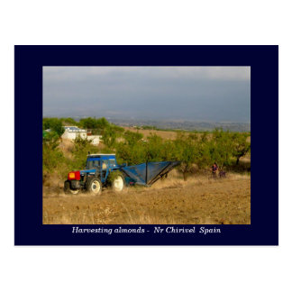 Tractor harvesting almonds rural Spain Postcards