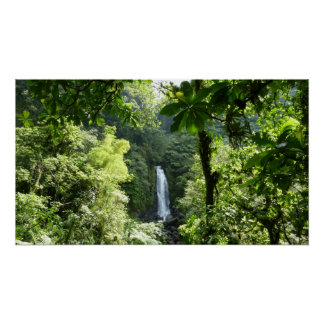 Trafalgar Falls Tropical Rainforest Photography Poster