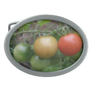 Traffic Light Tomatoes Belt Buckle