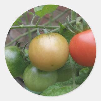Traffic Light Tomatoes Stickers