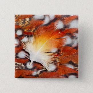 Tragopan Feather Still Life 15 Cm Square Badge
