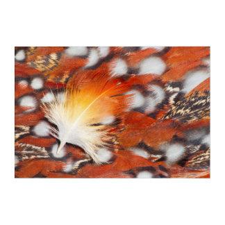 Tragopan Feather Still Life Acrylic Wall Art
