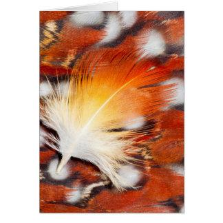 Tragopan Feather Still Life Card