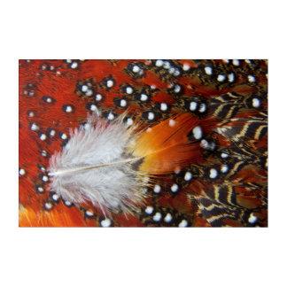Tragopan Feathers Still Life Acrylic Print