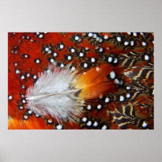 Tragopan Feathers Still Life Poster