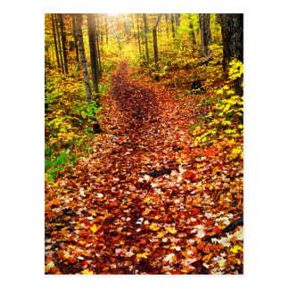 Trail in fall forest postcard