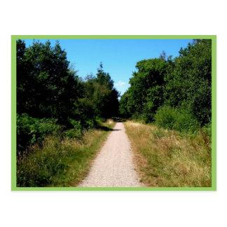 Trail Through Forest Postcard