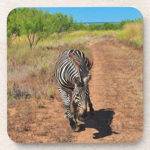 Trailing Zebra Coaster