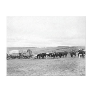 Train of Oxen and Wagons Headed for Black Hills Canvas Print