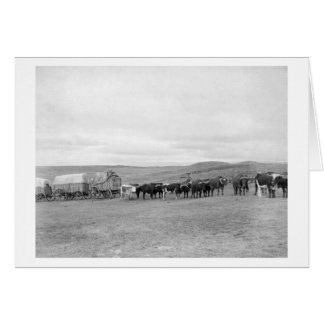 Train of Oxen and Wagons Headed for Black Hills Card
