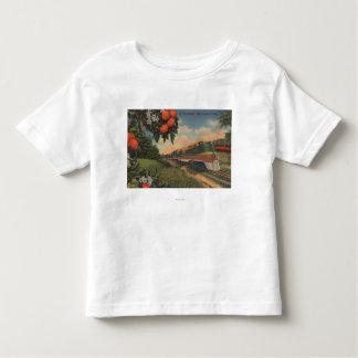 Train- Orange Blossom Special T Shirts