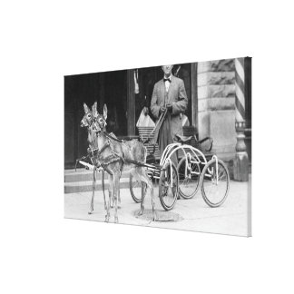 Trained Deer Harnessed to an Odd Sleigh on Wheel Canvas Print
