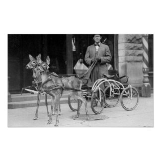Trained Deer Harnessed to an Odd Sleigh on Wheel Poster
