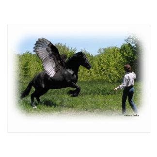 Training Pegasus Post Cards