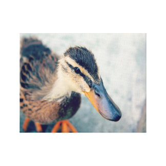 Tranquil Duck Canvas Print
