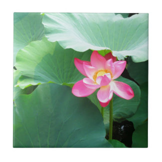 Tranquil Lotus Small Square Tile