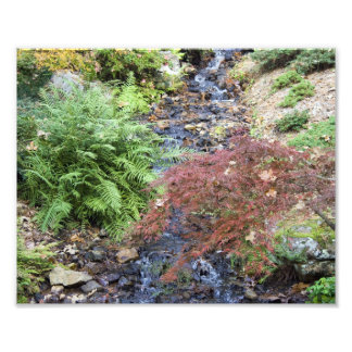 Tranquil Stream Photo Print