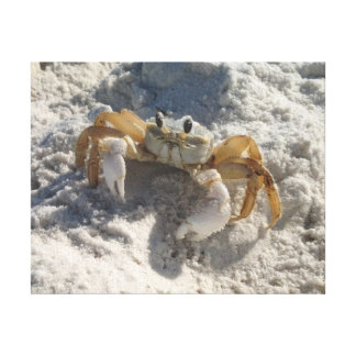 Translucent Crab Canvas Prints