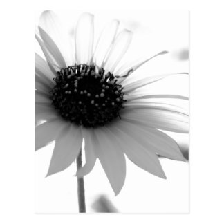 Transparent BW Flower Postcard