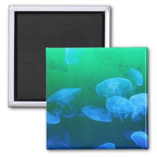 Transparent Jellyfish Square Magnet