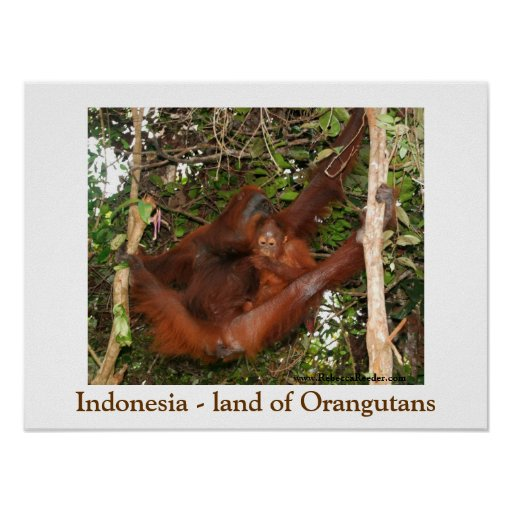 Travelling the Land of Orangutans Poster