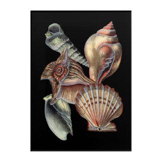 Treasures of the Sea Acrylic Print