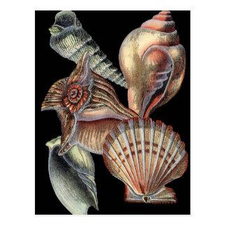 Treasures of the Sea Postcard