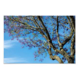 Tree against blue sky photo print