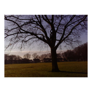 Tree All Alone Photo Poster Print