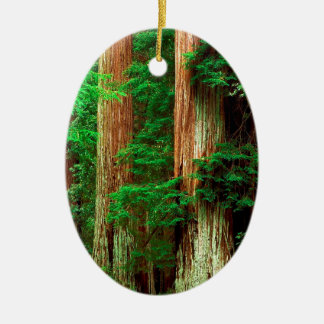 Tree Ancient Giants Redwoods Ceramic Oval Decoration