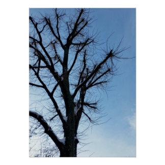 tree and clear sky in winter poster
