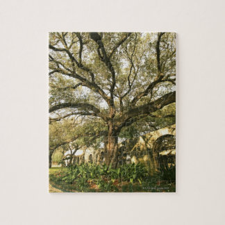 Tree and landscaping in San Antonio, Texas Jigsaw Puzzle