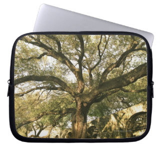 Tree and landscaping in San Antonio, Texas Laptop Sleeve