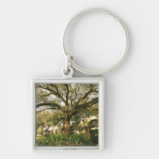 Tree and landscaping in San Antonio, Texas Silver-Colored Square Key Ring
