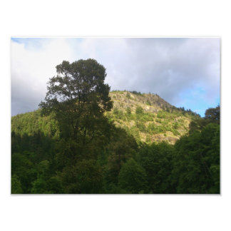Tree and Mountain Photo Art